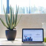 ¿Cuáles son las mejores plantas para oficina?