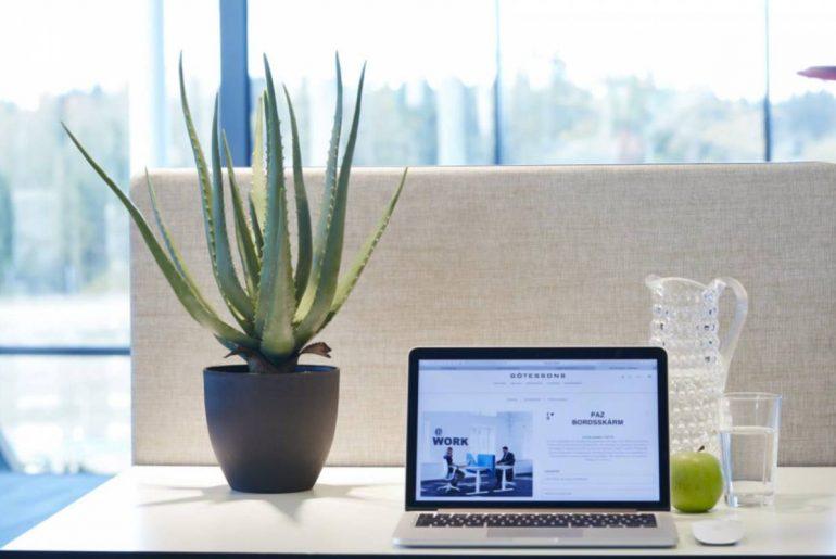asei mejores plantas para oficina
