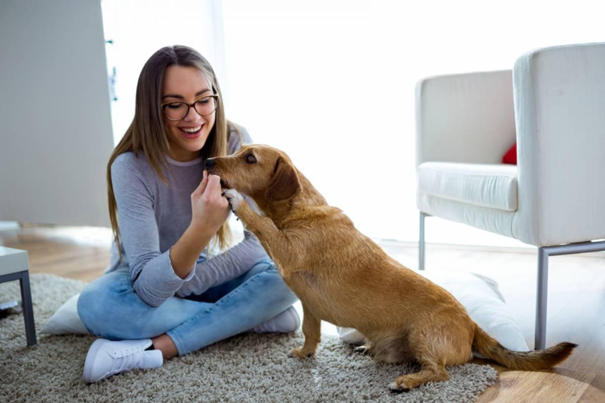 Perros para departamento: ¡Conoce las razas más convenientes!