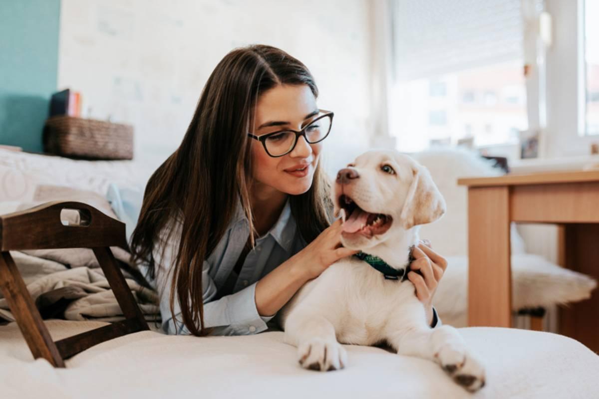 ¿Cómo mantener a tu perro dentro de casa?