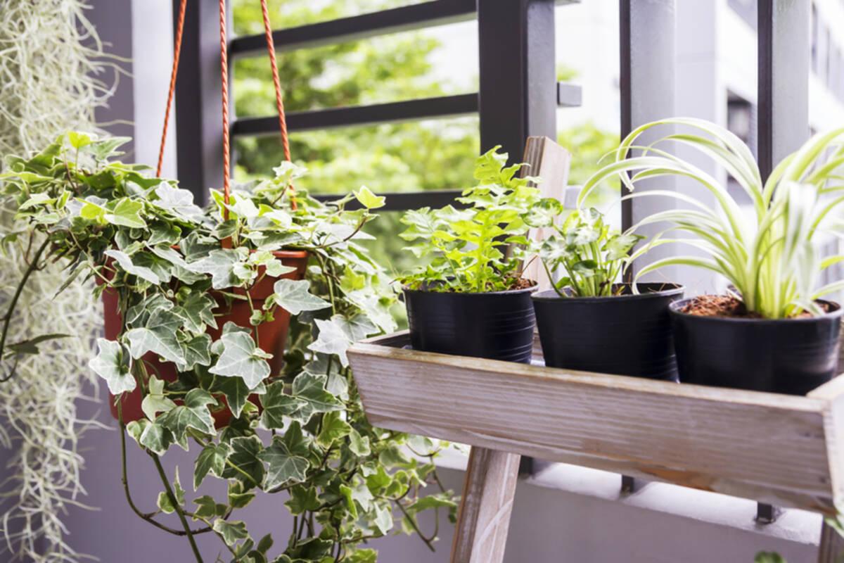 Cómo tener un jardín pequeño en tu departamento
