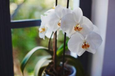 Conoce las mejores plantas que purifican el aire
