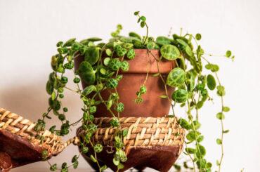 Plantas de interior resistentes y fáciles de cuidar en tu depa