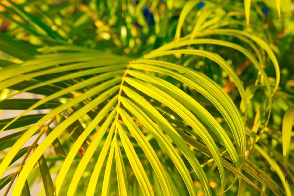 ¡Conoce las mejores plantas que refrescan la casa y prepárate para el verano!