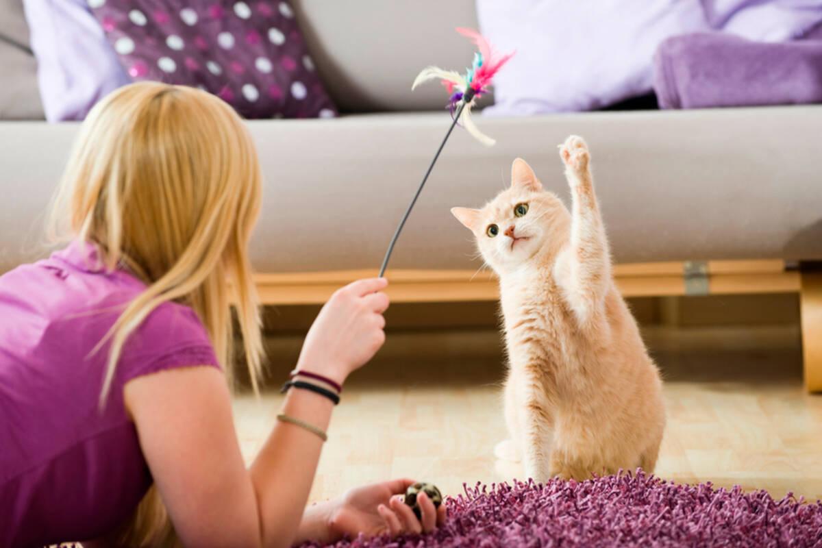 ¿Cómo tener mascotas en casa de forma segura?