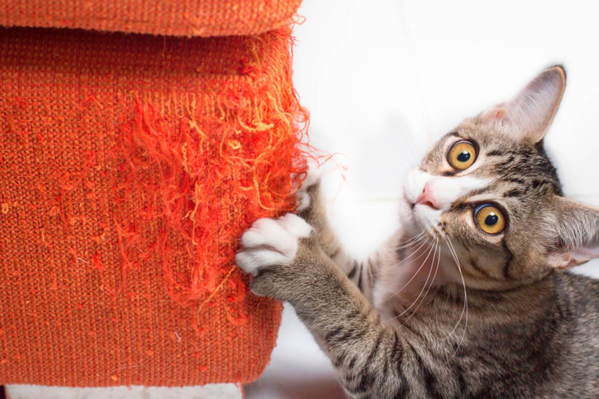 ¿Cómo proteger tus muebles de los gatos? 4 medidas que te ayudarán