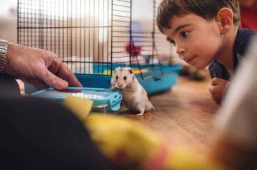 niño hamster departamento