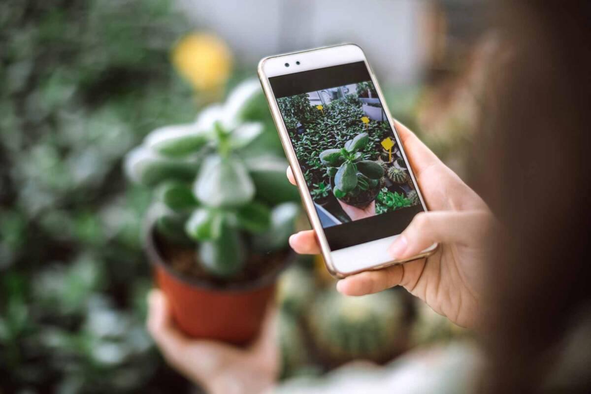 plantas celular app